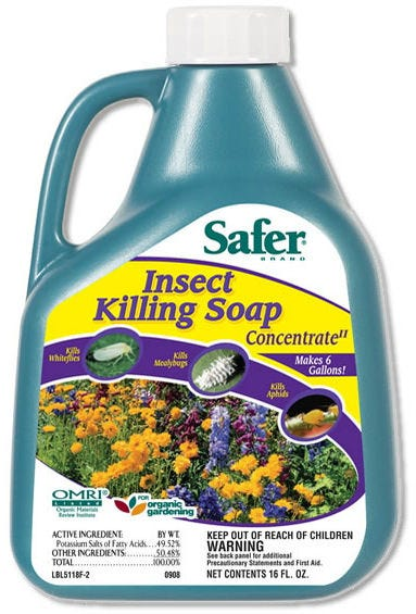 Safer Insect Killing Soap II Concentrate - 16 oz This 16oz Concentrate will make 6 gallons of OMRI Listed® insecticidal soap to eliminate soft-bodied insects. One bottle makes the equivalent of 24 Ready to Use bottles! The ability to use this organic insecticidal soap in your home and in your lawn or garden makes it the most economical and convenient solution to pest annoyances available on the market! The Safer® Brand insect killing soap utilizes the power of potassium salts of fatty acids (insecticidal soap). The potassium salts weaken the insect's waxy protective outer shell. Apply every 7-10 days when insects are present or as needed to prevent further damage. Safer® Brand Insect Killing Soap is highly preferable to chemical pesticides, which possess toxins that can kill beneficial insects and cause long-term detrimental effects on the environment. Another negative effect of chemical pesticides is the fact that insects can possibly build up a resistance to the chemicals in the pesticides. Unlike traditional synthetic chemicals, Safer® Brand Insect Killing Soap breaks down into its natural elements within 7-10 days, leaving no residual impact on the environment. Directions for Use: 1. SHAKE WELL. For best results use freshly mixed solution. 2. DO NOT use on new transplants, newly rooted cuttings or plants stressed by drought. Avoid application when temperature exeeds 90° F. 3. Apply when insects or signs of their damage appear. Thoroughly wet all surfaces of infested foliage and branches. 4. For full instructions depending on indoor/outdoor use and specific plants and insects, please refer to the Instructions link to the left. OMRI Listed® and compliant for use in organic gardening. Using insecticidal soap solutions in your garden provides you with effective aphid control, mealybug control and an overall pest free organic garden.