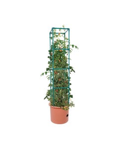 Heavy Duty Tomato Barrel w/Tower