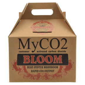 MyCO2 Mushroom Bag - Bloom MyCO2 – Mycelium Derived Carbon Dioxide are CO2 bags perfected. Unlike all the other CO2 bags that  come cultivating CO2 even before you get out of the checkout line,  MyCO2 has the patent pending customer activation technology, postponing the CO2 cultivation until you get it home and are ready to use it. One CO2 bag provides enough carbon dioxide for begging plants in a 4ft x 4ft grow tent with cycled exhaust. Use during the veg stage. We recommend safely placing multiple MyCO2 generators above the highest level of your plants to insure they receive the CO2 as it is generated. Below are recommendations for grow tents or similar sized grow rooms to reach optimal CO2 levels. These are just recommendations as there are several variables you must consider when determining how many MYCO2 AIR bags you will need. These considerations include ambient CO2 levels, tent/room size, and amount of vegetation using up the CO2. Up to 400 watt light in a 4x4 tent - 1 bag 600 watt light in a 4x4 or larger tent- 2 bags 1,000 watt light in a 5x5 tent- 3 bags We recommend replacing MYCO2 AIR bags every 3-4 months.   When MYCO2 Grow AIR bags are done producing CO2 for your growing needs they can be fruited to produce nutritious Blue Oyster mushrooms.   About Blue Oyster mushrooms.  To dispose of simply compost the contents of the bag. When MYCO2 AIR bags are finished producing CO2 for your growing needs they can produce nutritious Shiitake mushrooms for you to enjoy. To stimulate the MYCO2 AIR block to fruit mushrooms place it into the refrigerator overnight. When you remove the block from the refrigerator take it out of the bag and rinse the block under COLD water. The block will be covered with a dark fluid and will continue to produce small amounts of this fluid during the fruiting cycle. Place the block in a covered container such as a propagation tray with a clear dome. This will allow the humidit